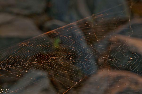 Leitplanken-Netz