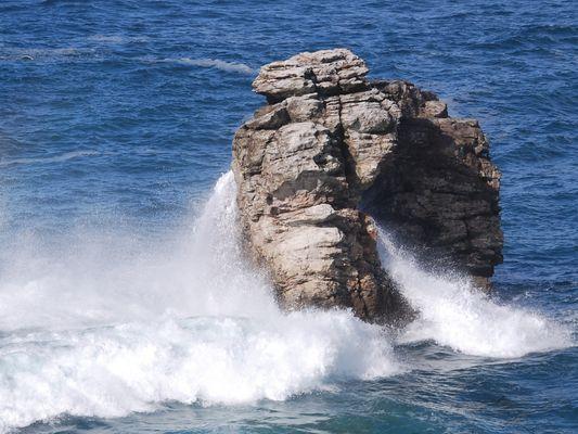 l'éléphant des mers