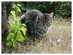 Lena im Garten