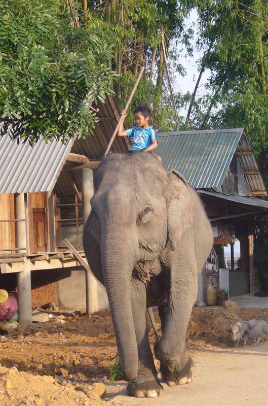 l'enfant à l'éléphant