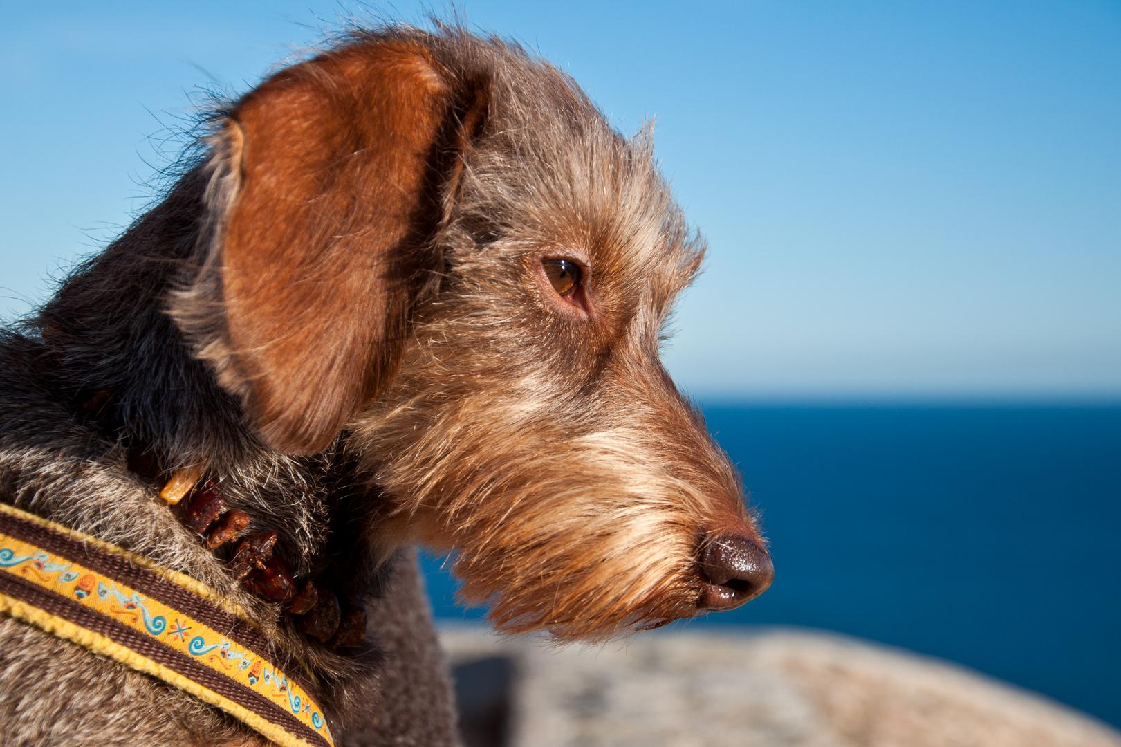 Leni geniesst die grandiose Aussicht von der Festungsmauer der Altstadt von Ibiza