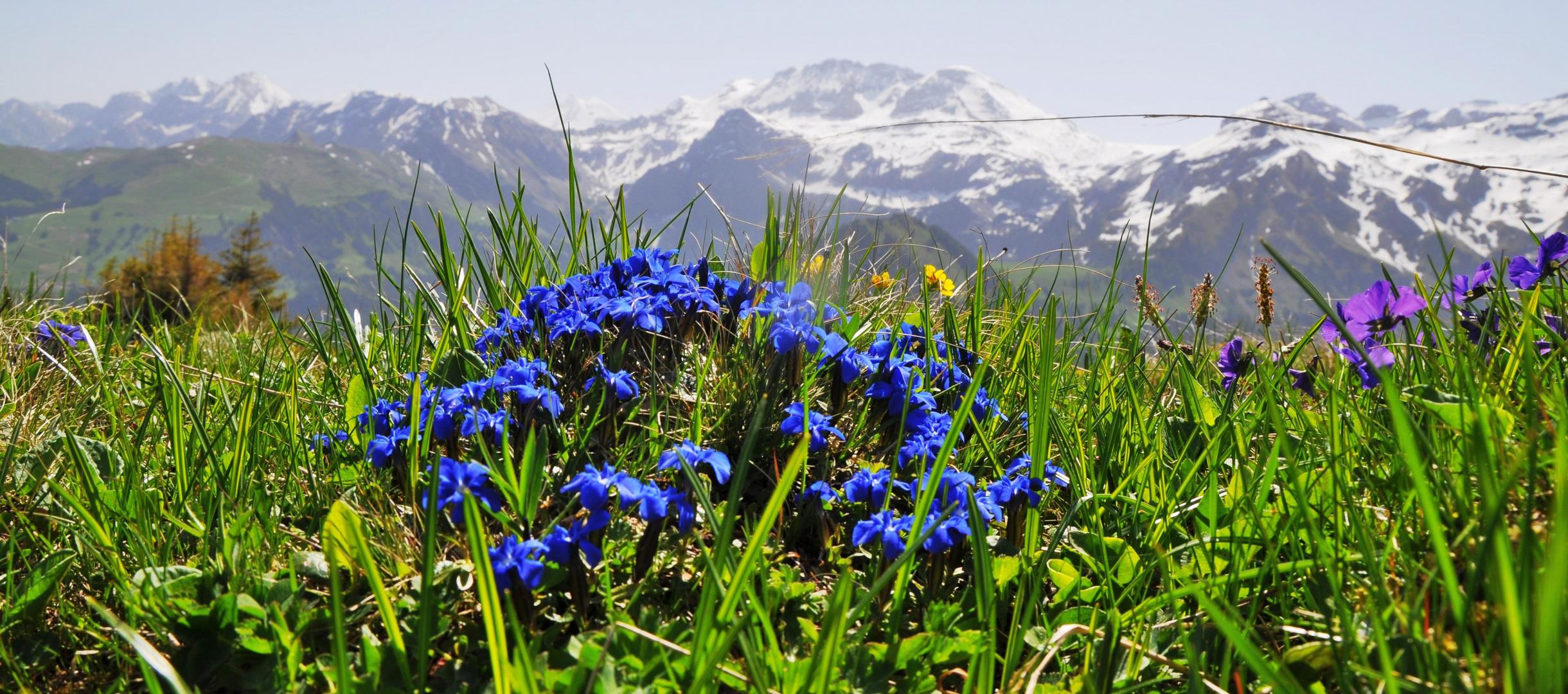 Lenk im Frühling