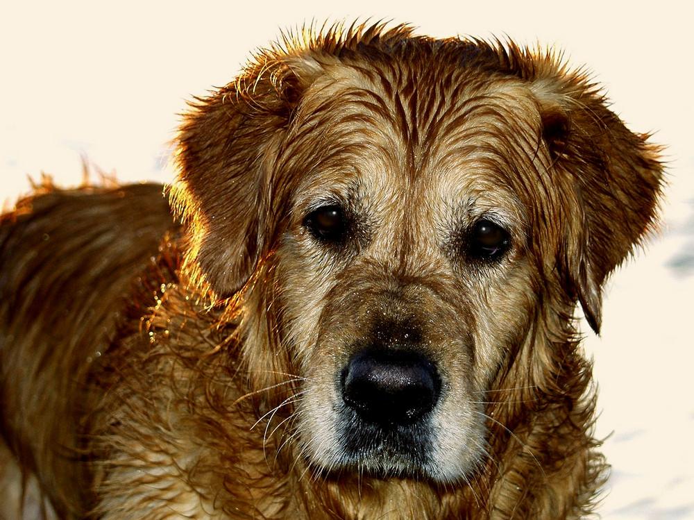 Lenny - Der Bade-Meister