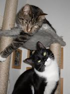 Lenny & Leo