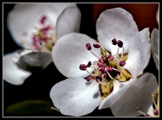 Lente - Printemps - Frühling - spring - Primavera