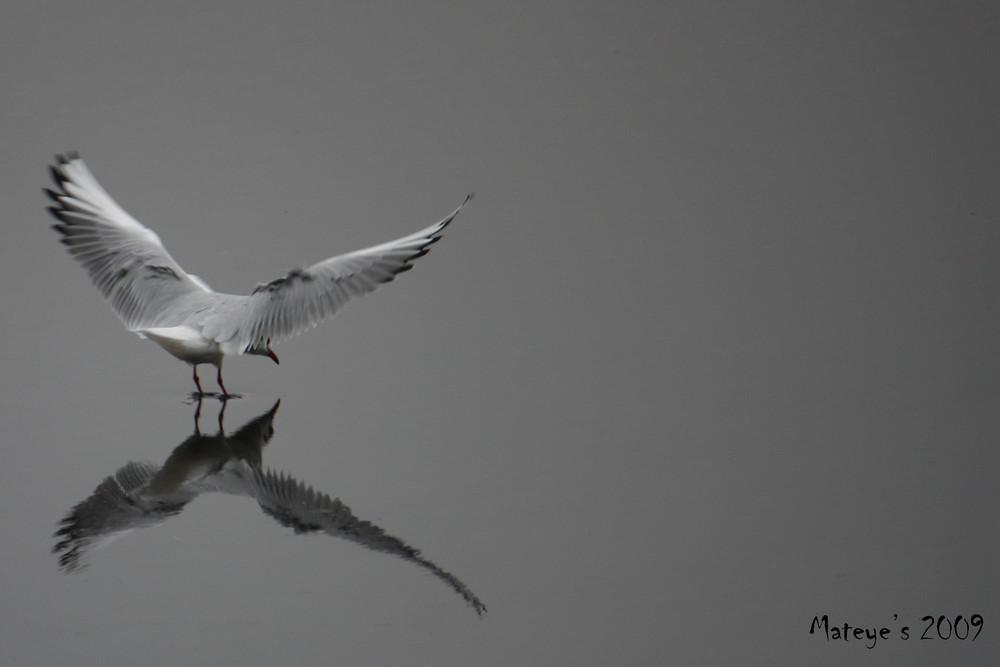 Lentement, les ailes déployées !