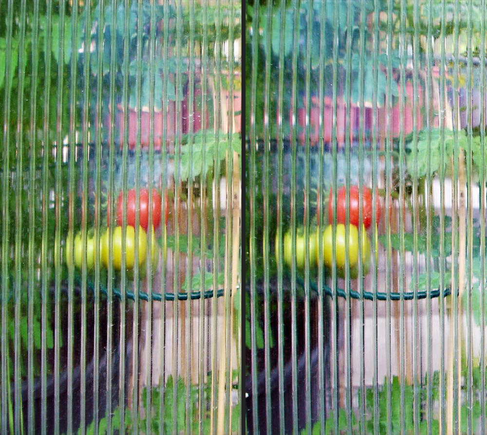 Lentikular-Tomaten