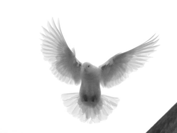 l'envol de l'ange