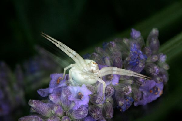 L'envol de l'araignée