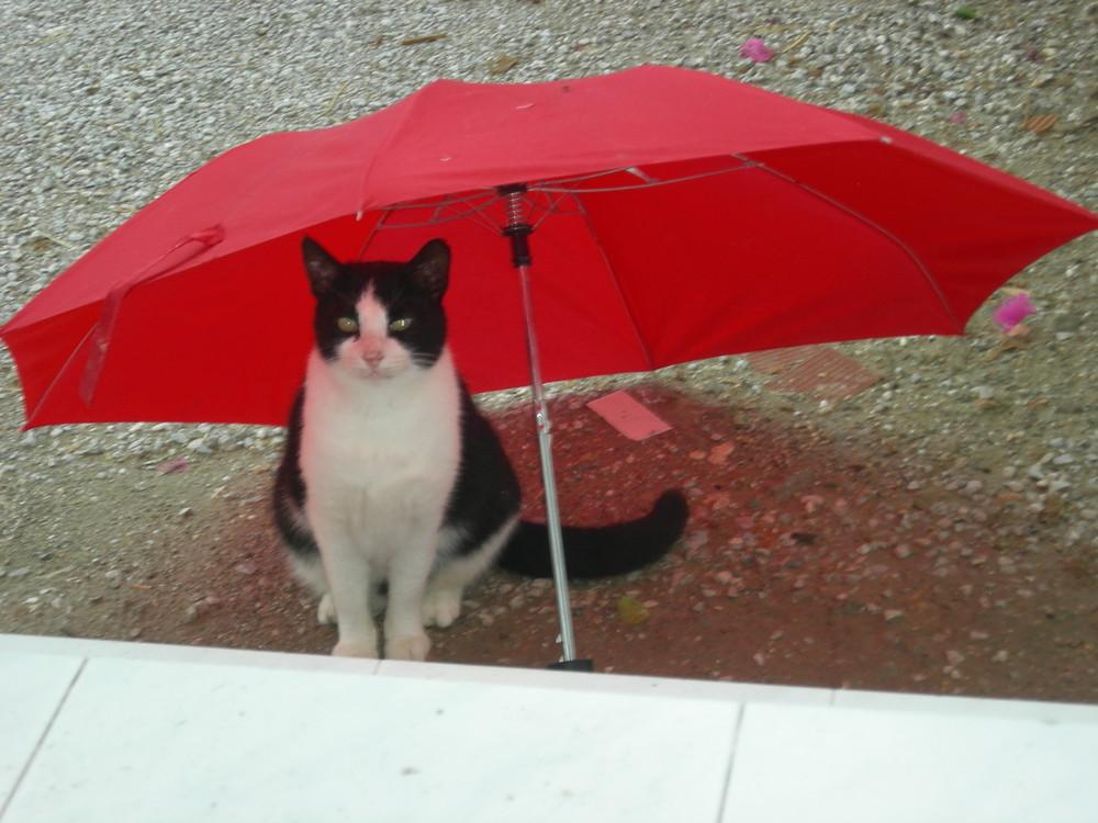 Leo - After the rain