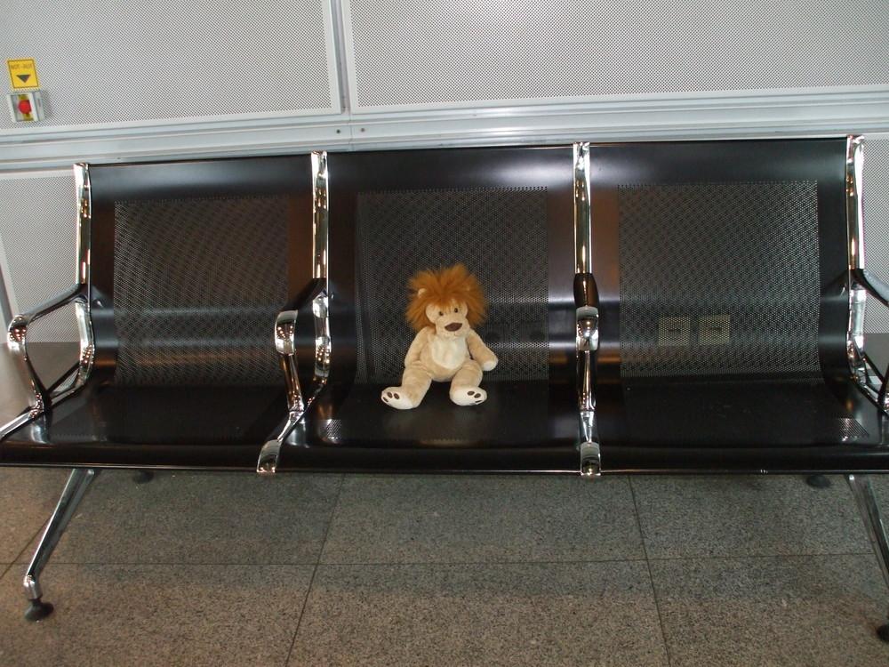 Leo am Flughafen