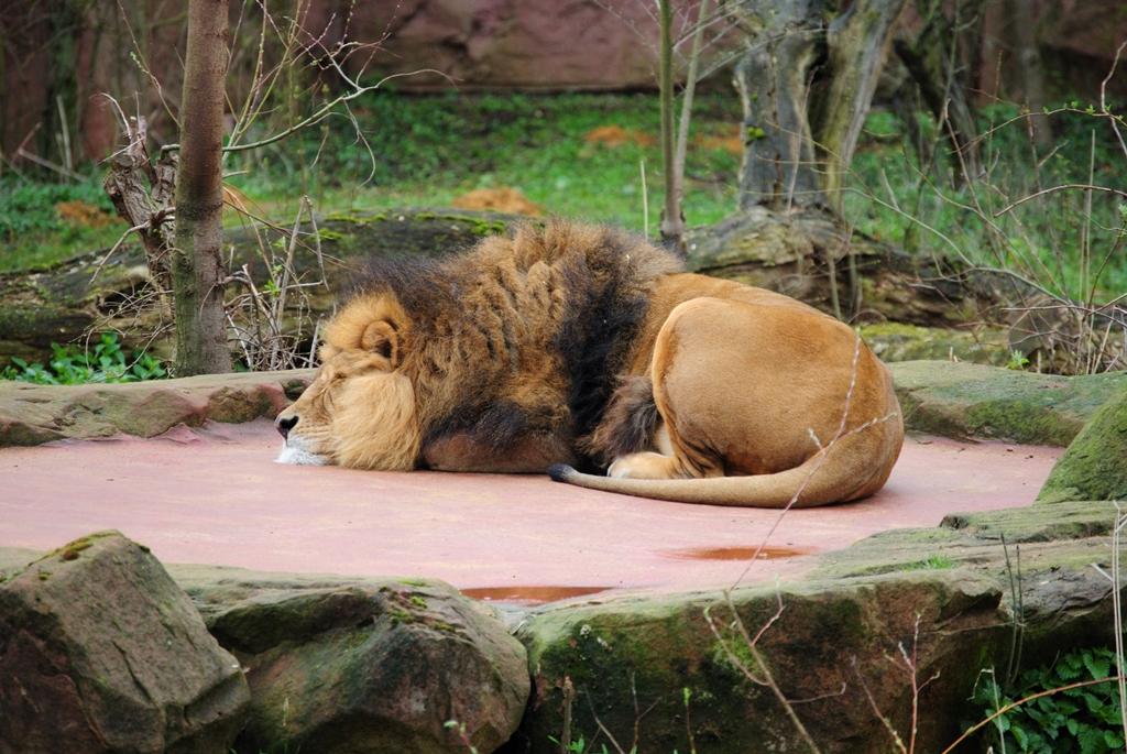 Leo beim Mittagsschlaf....