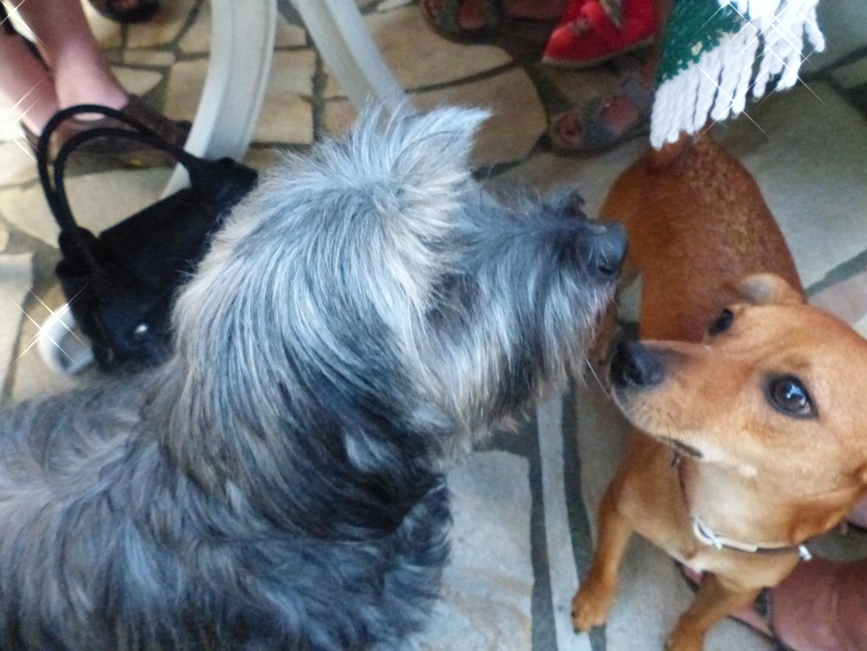 Leo und Max