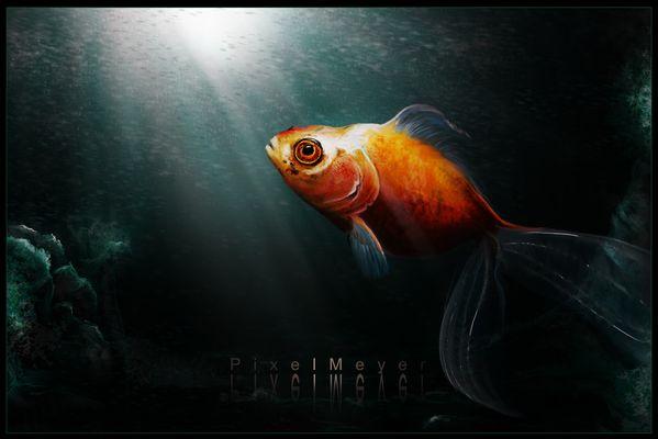Leon der Fisch