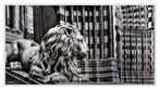 leone di San Lorenzo...