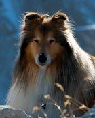Leone Kischo in the Dolomites