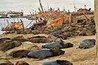 léones marinos