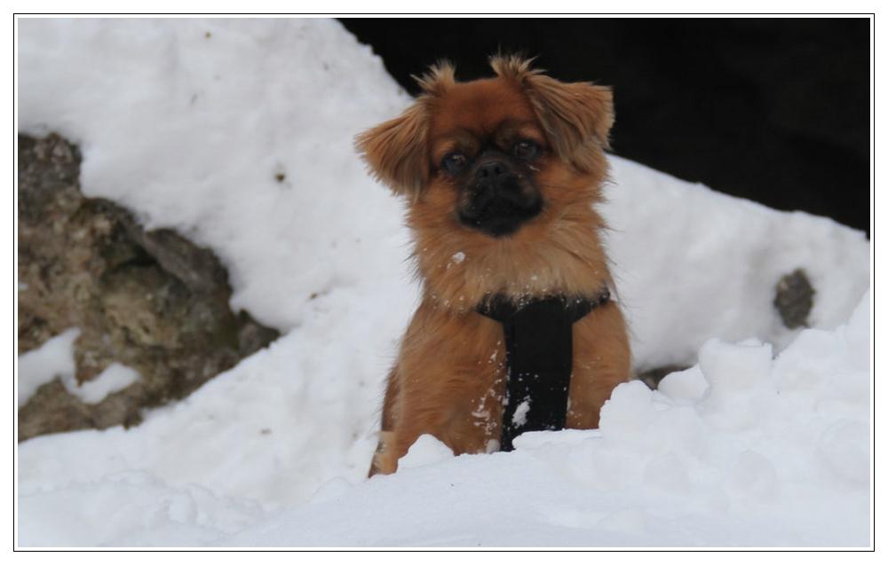 Leonie im Schnee