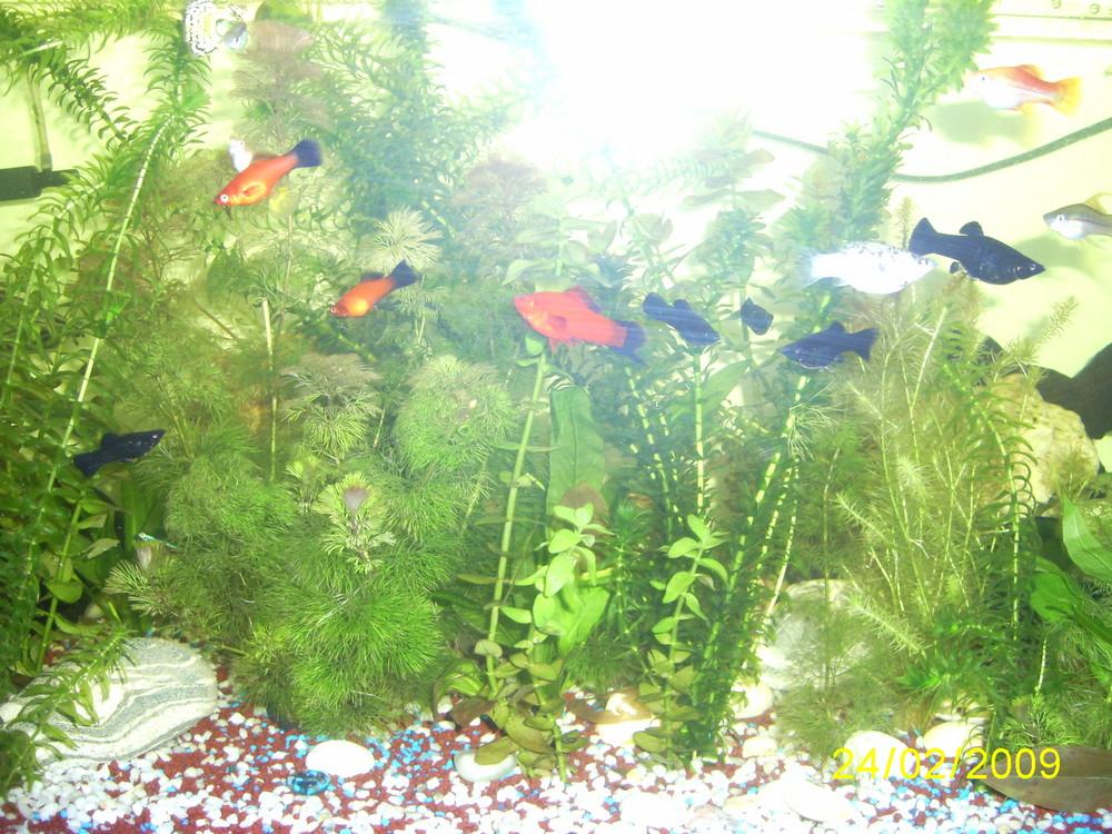 Leonie´s Aquarium