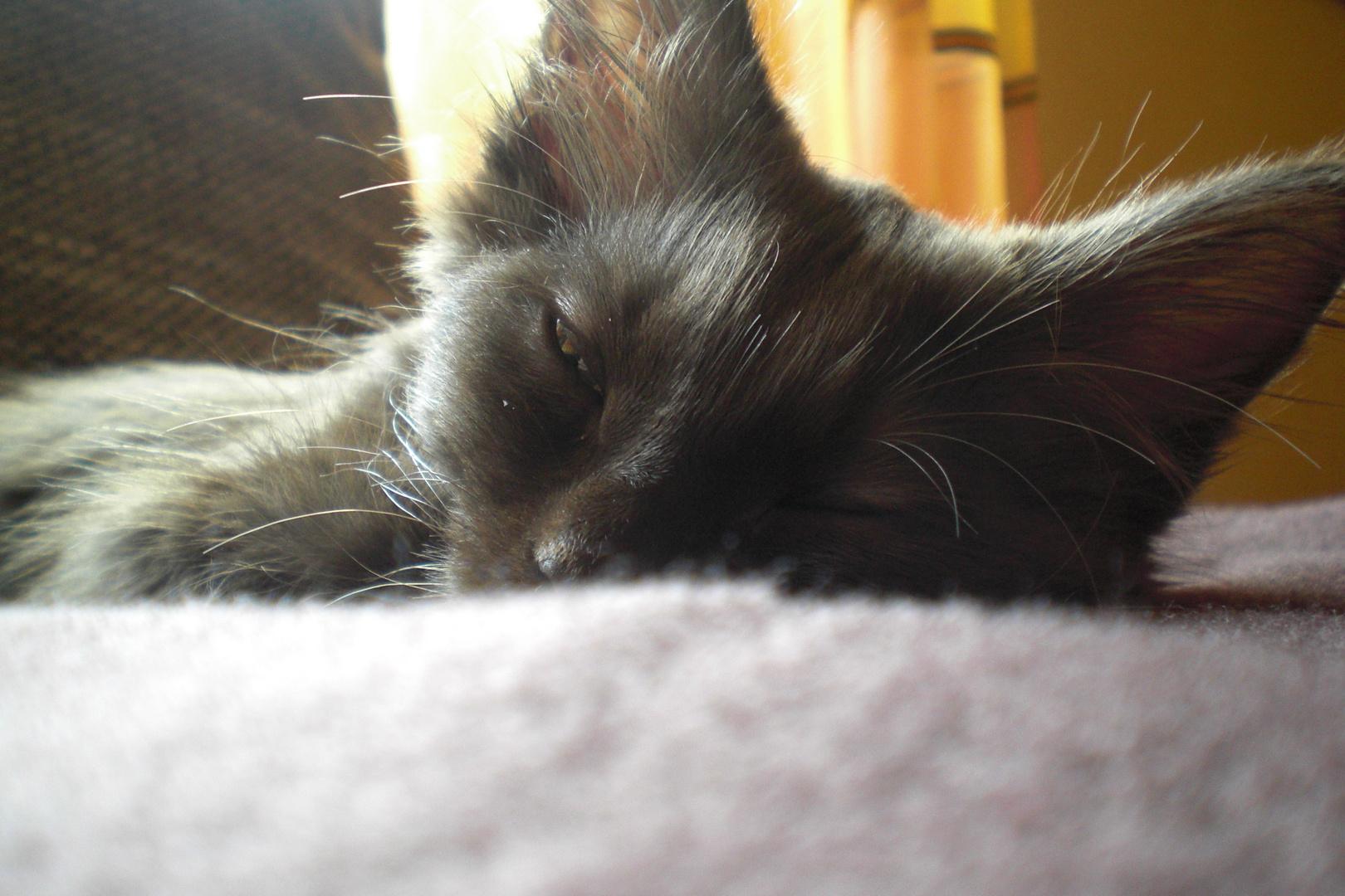 Leoninskie a sleep :)