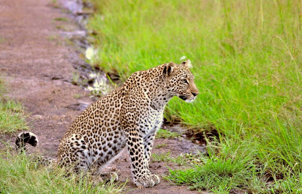 "Leopard "" Bahati """