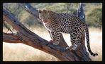 Leopard -reload-