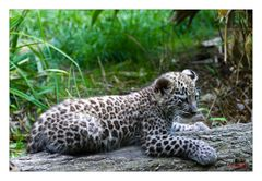 Leopardenmitze