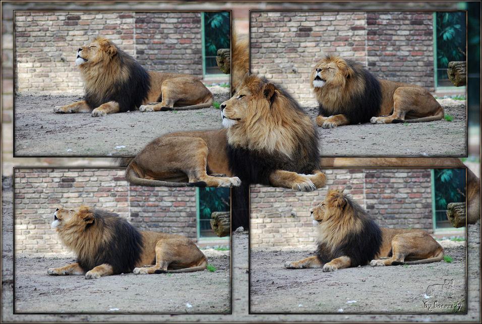 Leo/Piefke zeigt hier, daß er noch mehr macht als schlafen (1)