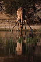 Leroo La Tau, Makgadikgadi pan, Botswana 2