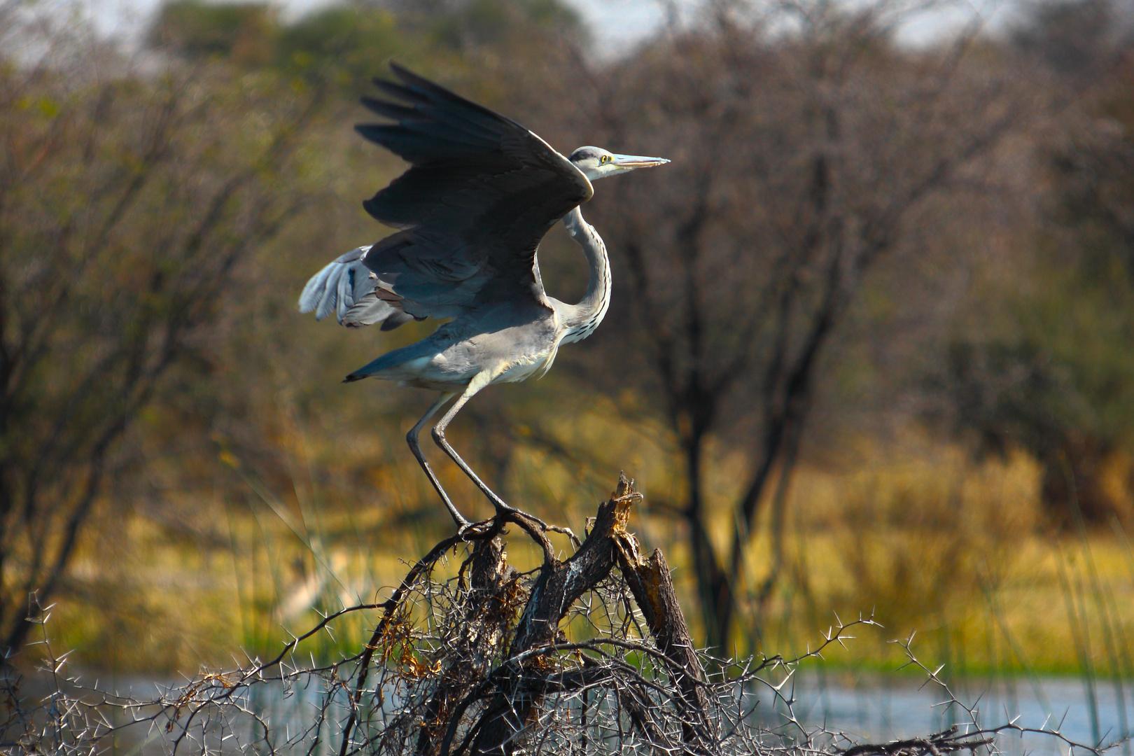 Leroo La Tau, Makgadikgadi pan, Botswana 4
