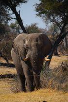 Leroo La Tau, Makgadikgadi pan, Botswana 5