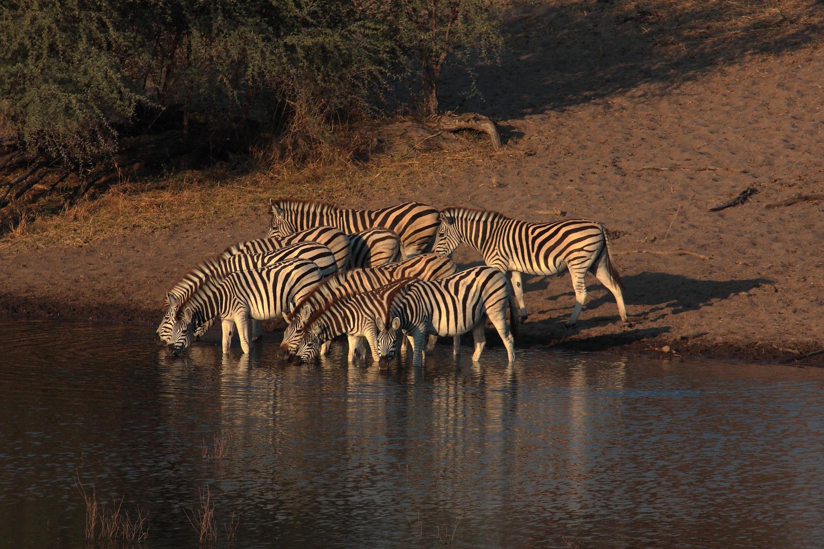 Leroo La Tau, Makgadikgadi pan, Botswana