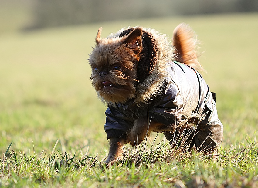Leroy rennt ....