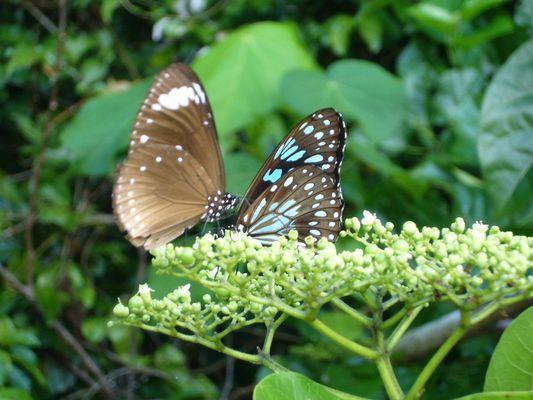 Les ailes colorées