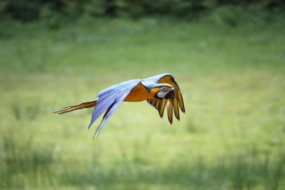 Les ailes déployées !