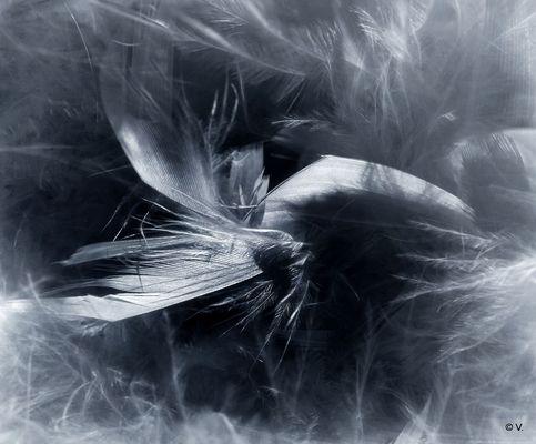 les ailes d'un ange...