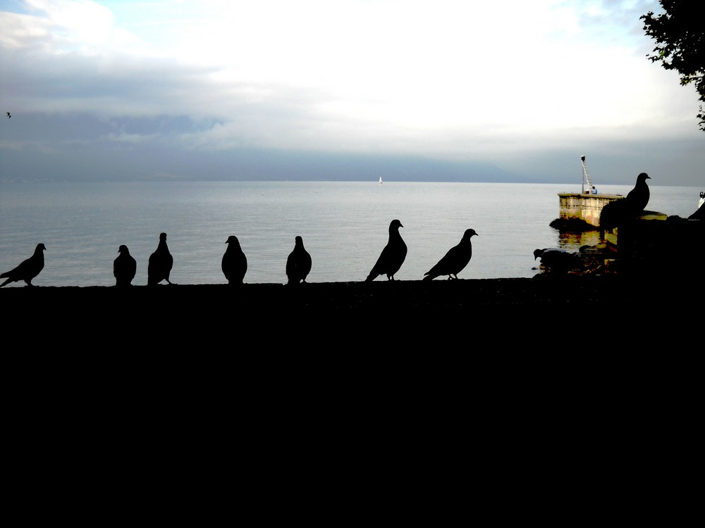 * Les amis pigeons