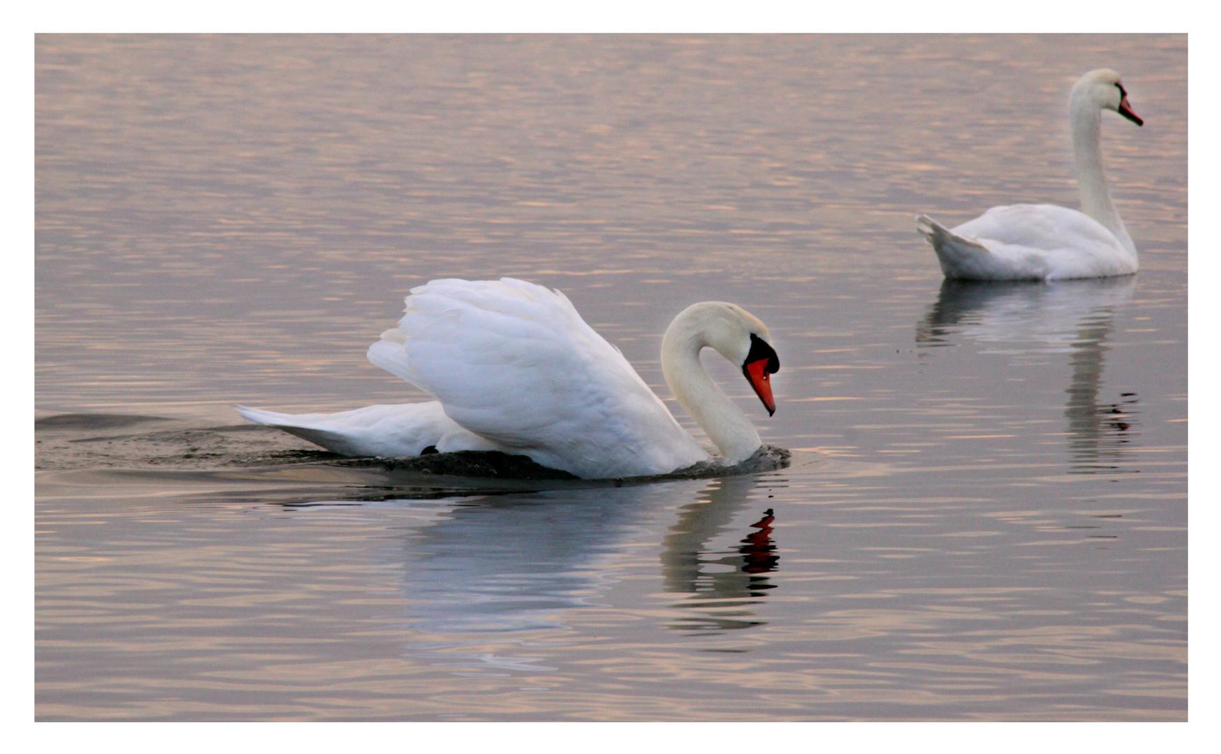 Les amoureux du lac rose