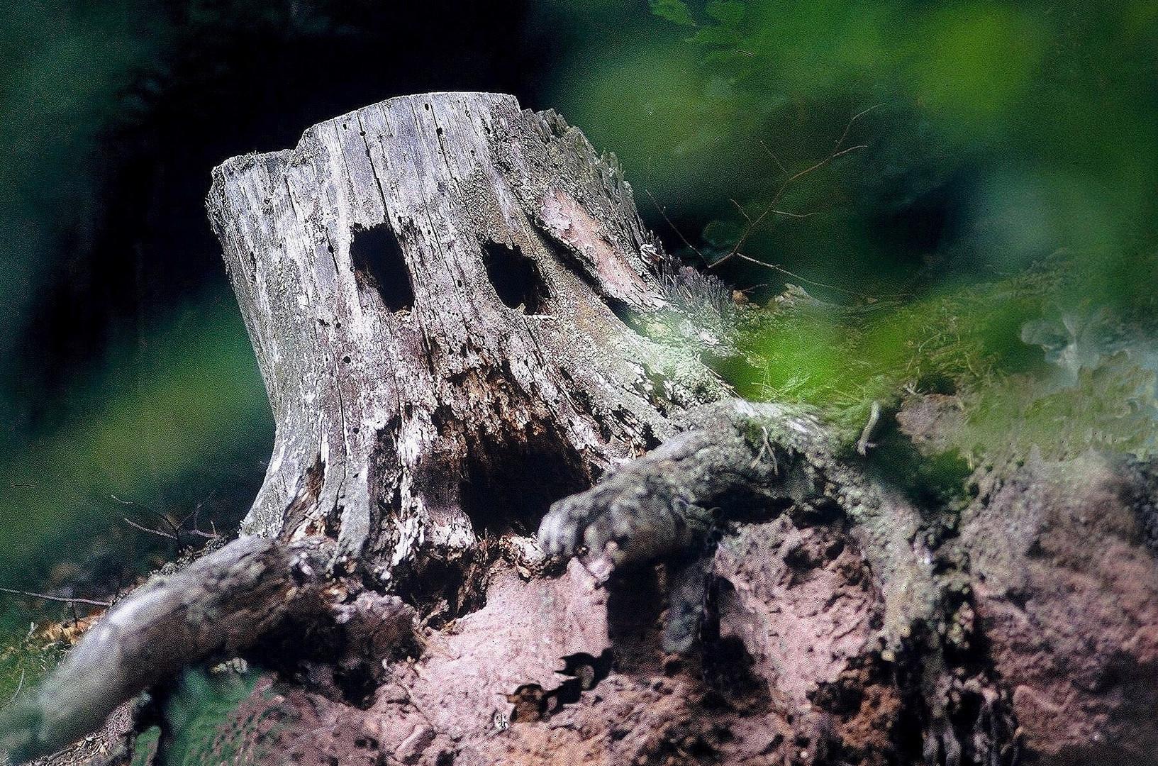 Les arbres aussi peuvent crier