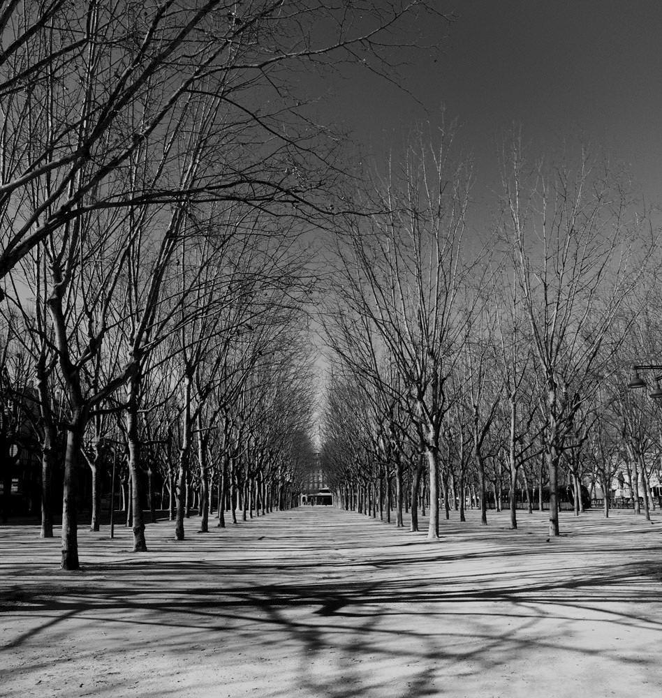 Les arbres de la place