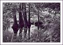 Les arbres de l'eau de lorel79