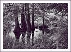 Les arbres de l'eau