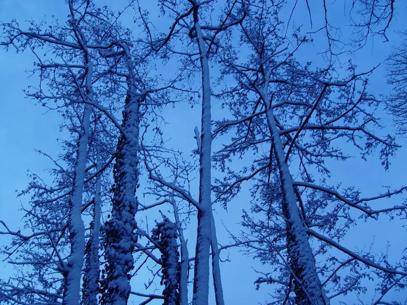 Les arbres du lac aussi sous la neige