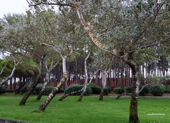 Les arbres du vent..