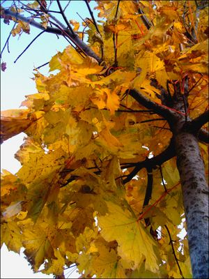 Les arbres en automne.