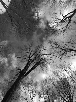 Les arbres qui poussent du ciel
