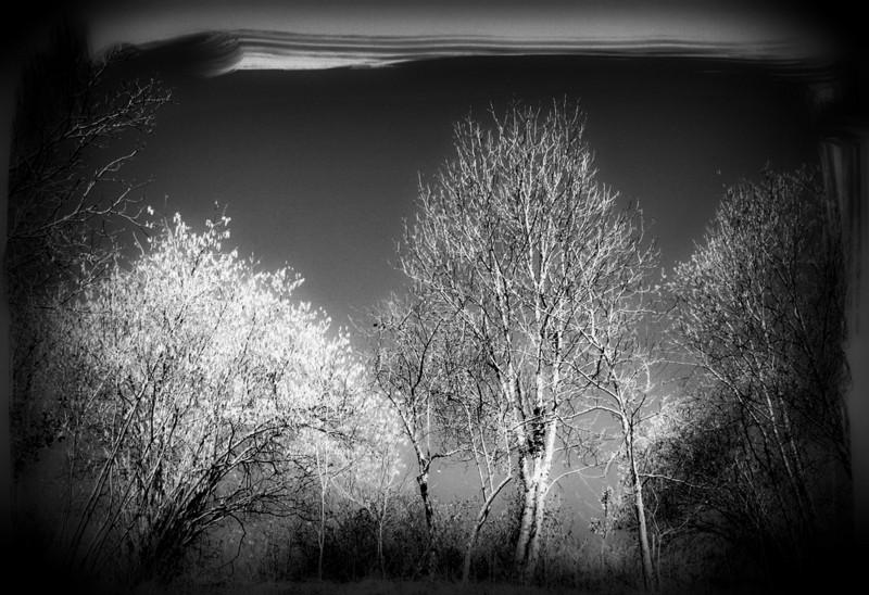 Les arbres scintillants