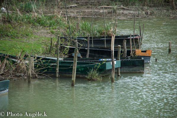 Les barques de la Marne ! !