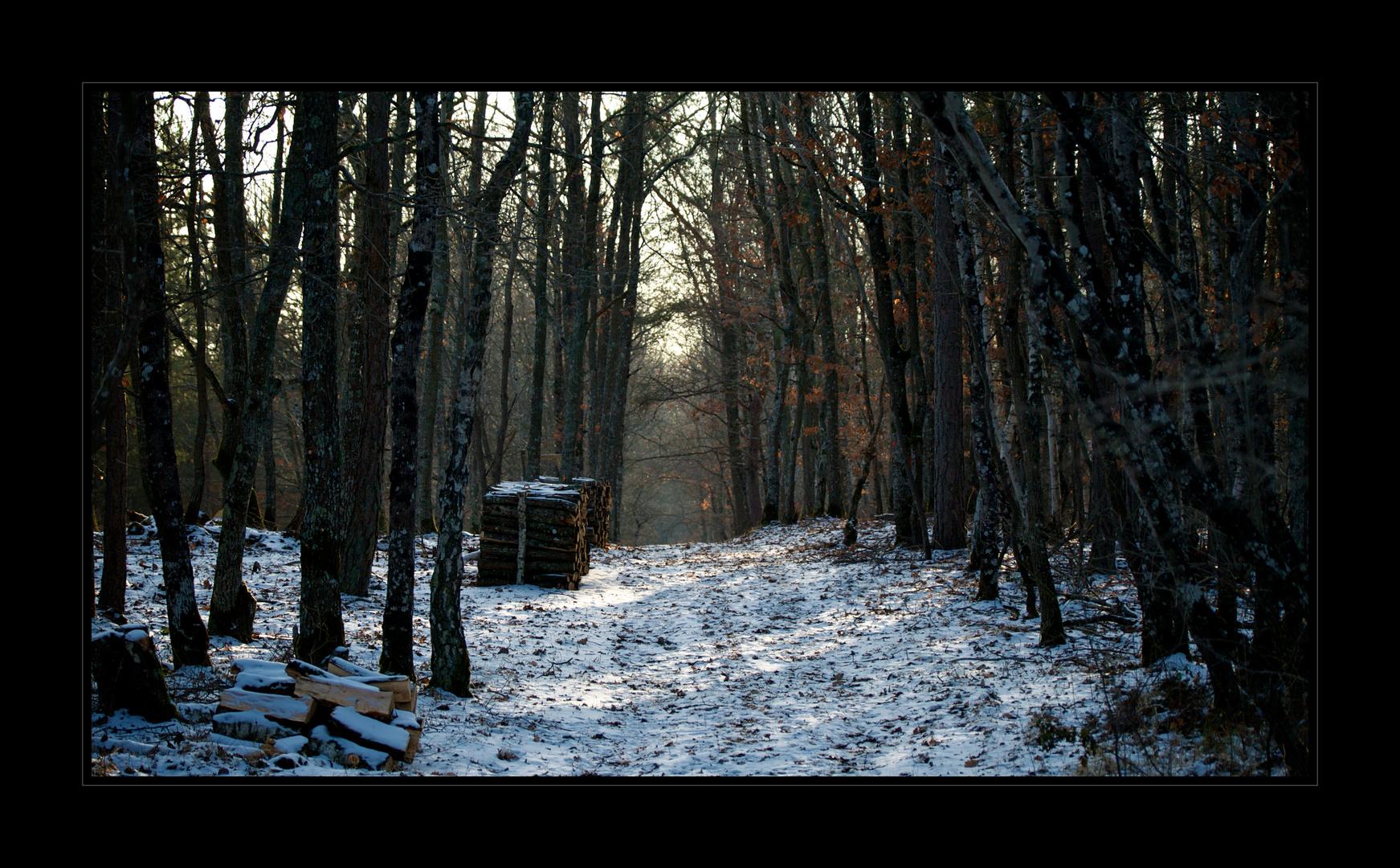 Les bois de Huisseau 2