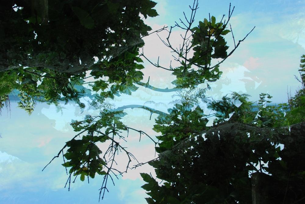 Les branches dans les yeux